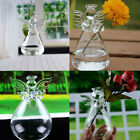 Hanging Glass Planter Vase Container Garden Ball Fish Tank   Micro Landscape
