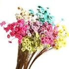 Внешний вид - Pressed Bunch of Flowers with Branches Real Natural Dried Rare DIY Floral Decor&