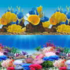 "Rainbow Reef Coral 2 Scene 24"" Aquarium Background"