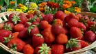 100 Strawberry Fruit Seeds Rare Mixed rainbow Sweet Plants for Home & Garden