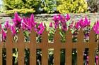 Garden Picket 5 Panels Fence Lawn Fencing Path Flowers 2.3 M Brown Or Withe