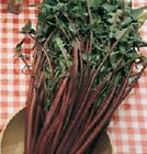Chicory Seeds, Catalogna Italiko Rosso - Distinctive Red Ribs - Free Shipping!!!