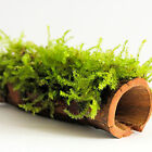 TANTORA CATAPPA LOG TROPICA MOSS SHRIMP SHELTER Pelia Spiky Weeping Java Xmas