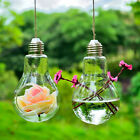 Clear Light Bulb Shape Glass Hanging Hydroponic Flower Vase Home Decor Container
