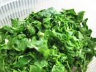 Swiss Chard Green Seeds - Helps regulate blood sugar!! Good For You!! Free Ship!