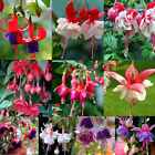 New Rare Flower Seeds Colorful Golden Bell DIY Home Garden Indoor Plants Decor
