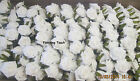 BULK BUY 180  ARTIFICIAL FOAM ROSES  WHITE OR IVORY**limited stock**£1.43 oer b