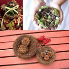 Top Sale Marriage Proposal Wedding Decorations Photography Props Bird Nest Cages