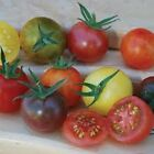 Rainbow Surprise Cherry Mix Tomato Seeds! A Beautiful Gourmet Mix!  DELICIOUS!!!