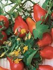 Organic Red Fig Tomato Seeds - Hundreds of 1-1/2-inch Tasty Pear Shaped Tomatoes