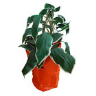 Various QTY's Potato Carrot Vegetable planting bag grow patio 35cm x 50cm
