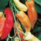 Boris Hybrid Sweet Pepper Seeds - Peppers are mild, sweet, and delicious.!!