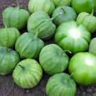 Tamayo F1 Hybrid Tomatillo Seeds - for green salsas and Mexican cooking.!!!