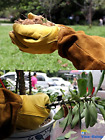 Gardening Gloves Cowhide Leather Rose Pruning Garden Work Protective For Women