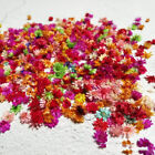 100PCS Dried Flower Head Daizy Glass Cover Nail Art Filling Epoxy Hand Craft DIY