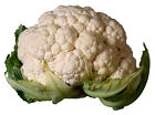 Cauliflower Seed: Snowball Self Blanching Cauliflower  Fresh Seed  FREE Shipping