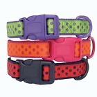 Dog BRITE POLKA DOT Pet Collar Puppy XS, S, M, L Purple Pink Red Durable Nylon