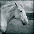 Pete Kelly KNIGHT'S STEED animal print, PREMIUM QUALITY Giclee, various sizes
