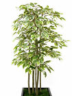 Artificial Variegated Ficus Tree ~ Hand built ~ Various Sizes ~ Mothers Day Gift
