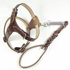 Large Breed Leather Pulling Dog Harness+Lead Leash Set Husky Pitbull Boxer M L