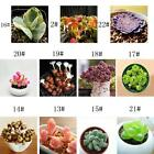 Fun 60PCS Seeds Mixed Succulents Seeds Rare Succulent Potted Plant Home Decor DD