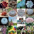 Succulent Adorable Flower Fragrant Seeds Blooms Radiation Protection