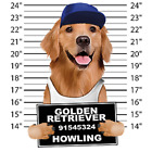 Golden Retriever Mug Shot Size Youth Small to 6 X Large T Shirt Pick Your Size image
