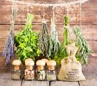 Heirloom Herb Seeds! Multi Variety. USA Non-GMO! Buyers Choice. Combined Ship.