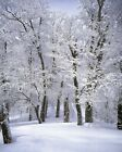 Trees Forest Environment Nature Landscape HD POSTER