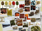 Choose Whole & Ground Herbs & Spices Indian Curry Arabic Chinese Cooking Spice