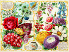 Canvas Home Wall Prints Vintage Seed Catalog Cover Flowers Print Color Picture