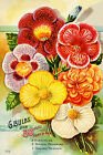 Canvas Wall Prints Vintage Seed Packet Gloxinias Begonias Flowers Print Picture