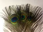 Peacock Eye Feathers Natural 10-12 inches UK Stock Best Quality