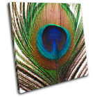 Peacock Feather Animals SINGLE CANVAS WALL ART Picture Print VA