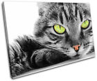 Cat kitten Pet Animals SINGLE CANVAS WALL ART Picture Print VA