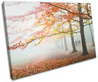 Foggy Forest Landscapes SINGLE CANVAS WALL ART Picture Print VA