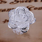 Modern Women 18K White Gold Plated Filigree Large Rose Flower Ring Jewelry A053