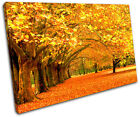 Autumn Trees Landscapes SINGLE CANVAS WALL ART Picture Print VA