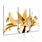 Lily Bloom Lilies Modern Wall Art Canvas Print Framed Box ~ 3pc Many Sizes