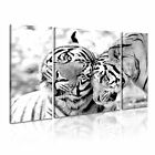 ANIMAL Tiger 21 Canvas 3B Framed Prined Wall Size ~ 3 Panels