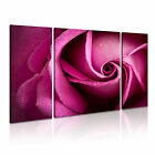FLOWER Rose 11 Canvas 3B Framed Printed Wall Art ~ 3 Panels