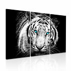 ANIMAL Tiger 27 Canvas 3A Framed Printed Wall Size ~ 3 Panels
