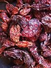 ghost chilies for sale uk