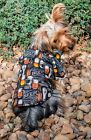 Hawaiian Shirt for DOG- BEER DESIGN!, size varied (but limited) MUST SEE