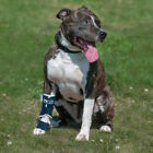 ORTHOPAEDIC BRACE FOR DOGS FOR CARPAL LAXITY AND TARSUS BALTO BT SPLINT