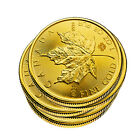 Lot of 5 - 1 oz Gold Canadian Maple Leaf Coins
