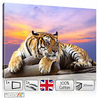 LARGE TIGER SUNSET ANIMAL MODERN CANVAS WALL ART PRINTS PICTURES STRETCHED