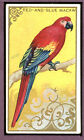 1910 T42-1 White Border Birds Red & Blue Macaw VG-EX 89542