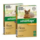 4-Pack ADVANTAGE for Cats -SYD Stock