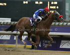 "Thor's Echo 2006 Breeders Cup Sprint Photo 8"" x 10 - 24"" x 30"""